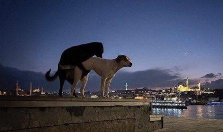 Perros y Gatos Estambul