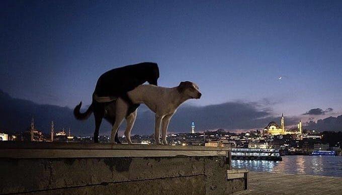 Estambul: la ciudad de los perros y gatos.